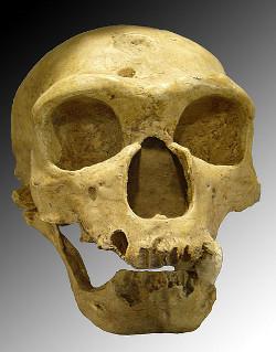 kranio-neandertahl-1