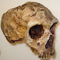 kranio-neandertahl-2